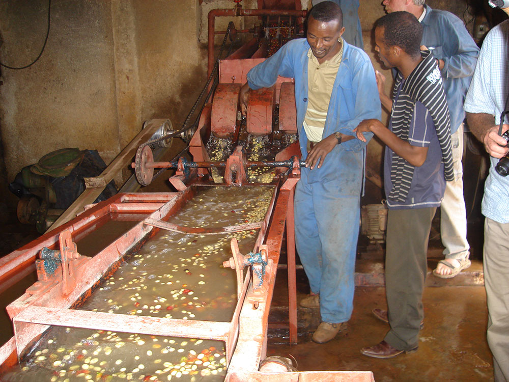 Coffee beans being dehusked - Jimma